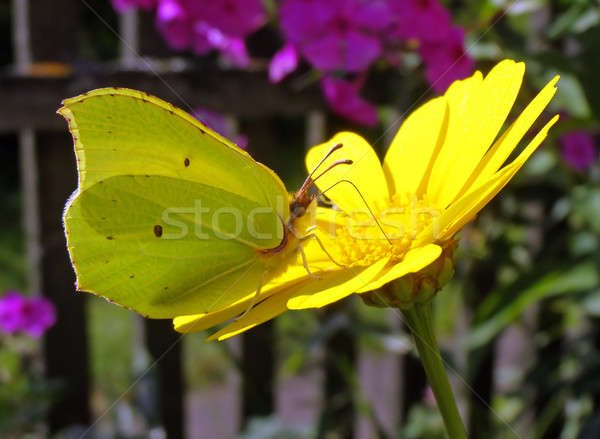 butterfly on flower Stock photo © basel101658