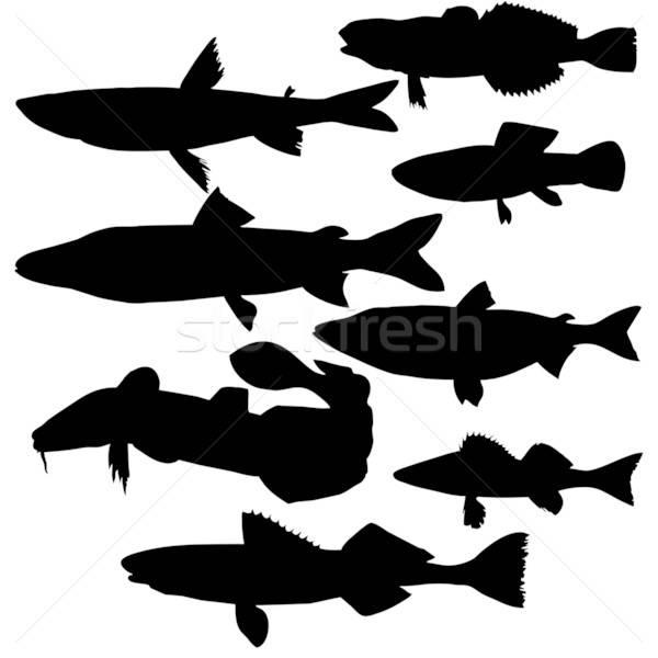 Vektor Zeichnung Silhouetten Fluss Fisch weiß Stock foto © basel101658