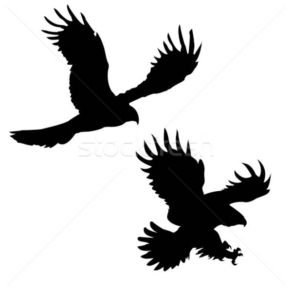silhouette of the ravenous birds on white background Stock photo © basel101658