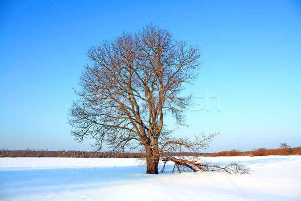 Eiken veld hemel hout bladeren witte Stockfoto © basel101658
