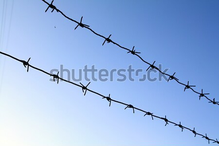 barbed wire Stock photo © basel101658