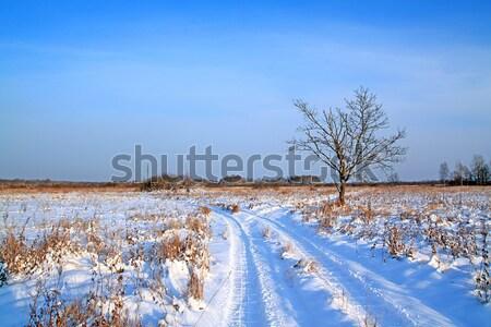 Vidéki út tél mező fa természet Stock fotó © basel101658