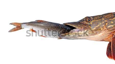 Comida olho lago animais pescaria cor Foto stock © basel101658