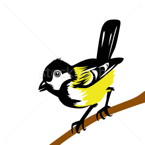 vector drawing tomtit on white background Stock photo © basel101658