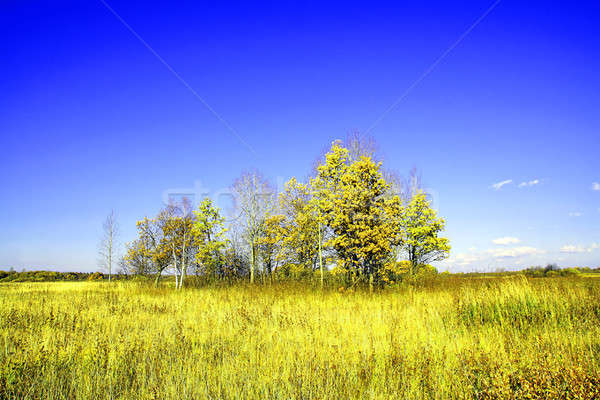 copse on  field Stock photo © basel101658