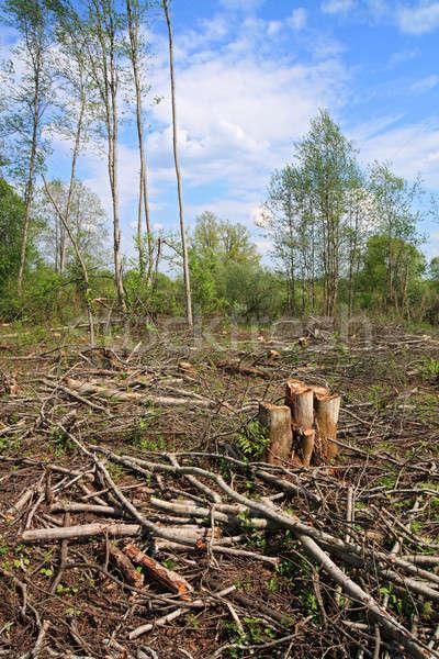 Ahşap kâğıt doku orman sanayi Stok fotoğraf © basel101658