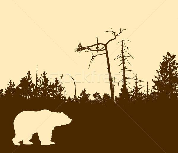 Vektör çizim siluet ayı ağaç orman Stok fotoğraf © basel101658