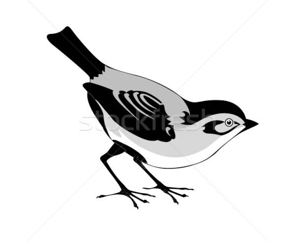 vector silhouette of the bird on white background Stock photo © basel101658