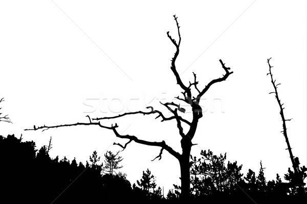 Vetor desenho silhueta secar árvore branco Foto stock © basel101658
