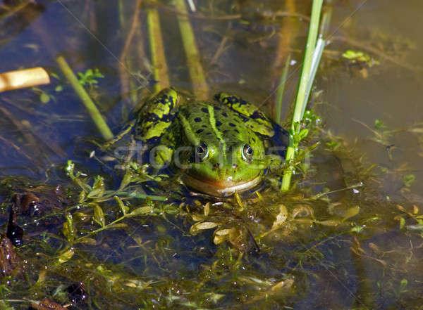 frog Stock photo © basel101658