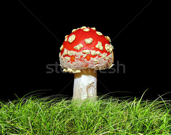 agaric in herb isolated on black background        Stock photo © basel101658