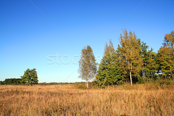 Geel eiken najaar veld voorjaar gras Stockfoto © basel101658