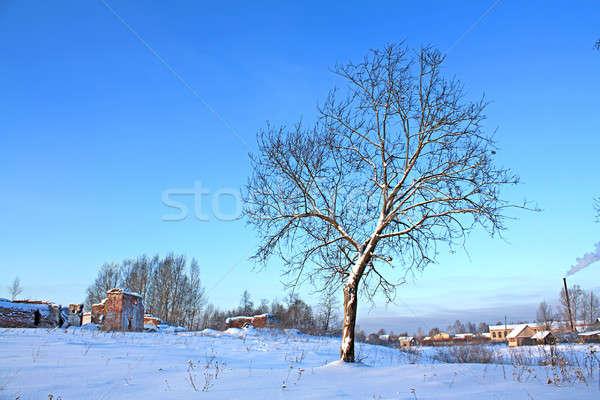 Piccolo rovere campo neve inverno blu Foto d'archivio © basel101658