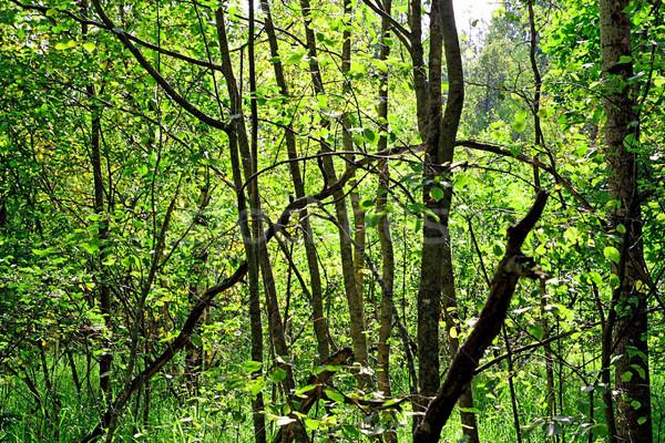 Stock fotó: Zöld · fa · textúra · fa · erdő · természet
