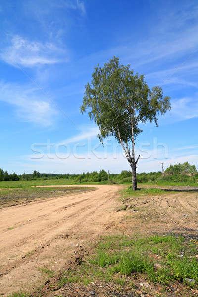 Envejecimiento abedul rural carretera primavera hierba Foto stock © basel101658