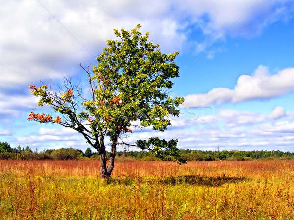 Citromsárga debit ősz mező tavasz tájkép Stock fotó © basel101658
