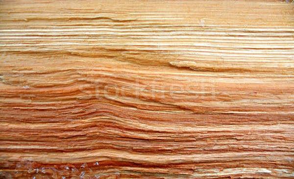 Grunge fa fa absztrakt természet háttér Stock fotó © basel101658