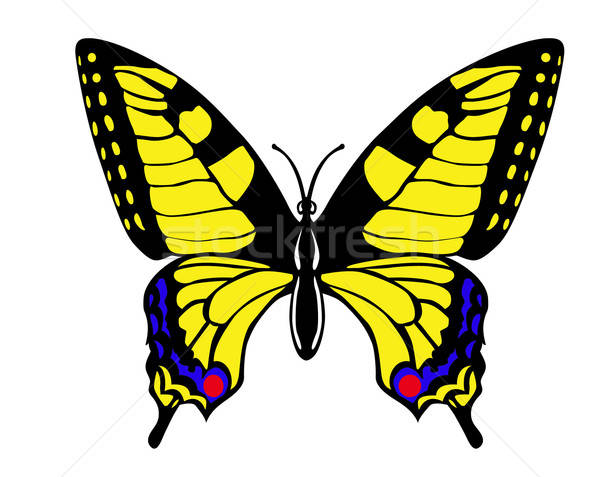 vector drawing butterfly swallowtail on white background Stock photo © basel101658