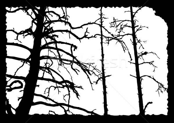 Vecteur dessin vieux arbre déchirée fiche Photo stock © basel101658