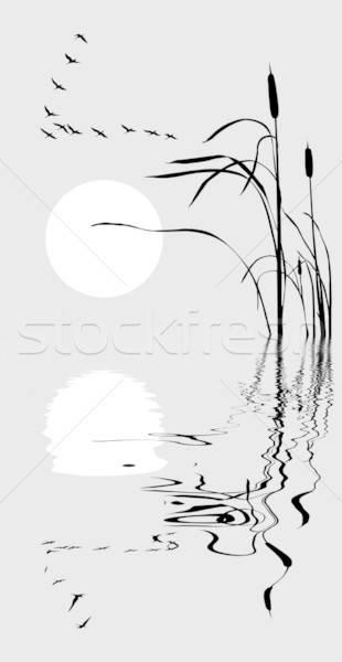 Vektor rajz sereg libák fű háttér Stock fotó © basel101658