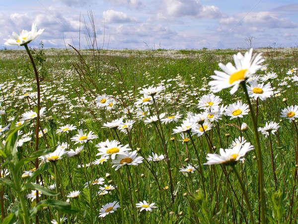 Stockfoto: Veld · bloem · voorjaar · gras · natuur · Blauw