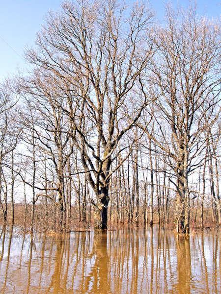 наводнения древесины небе природы зеленый бассейна Сток-фото © basel101658