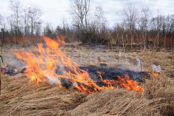 Tűz gyógynövény fű mező farm piros Stock fotó © basel101658
