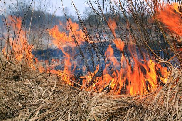 Yangın ot çim alan çiftlik kırmızı Stok fotoğraf © basel101658