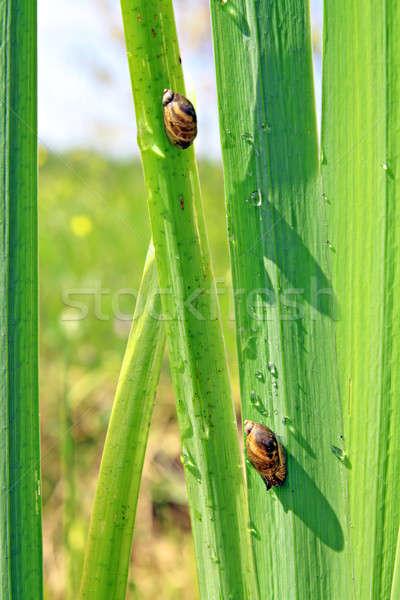 Foglio primavera sfondo animali mangiare impianti Foto d'archivio © basel101658