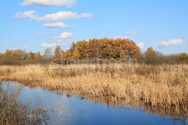 small river on autumn field Stock photo © basel101658