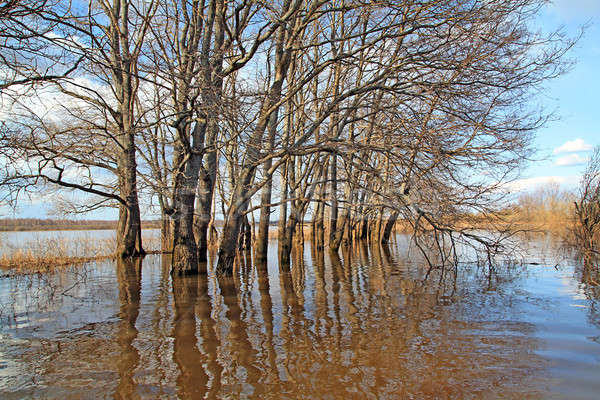 Alluvione rovere legno cielo natura bellezza Foto d'archivio © basel101658