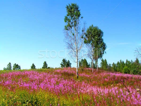 Leylak rengi alan ağaç bahar çim manzara Stok fotoğraf © basel101658