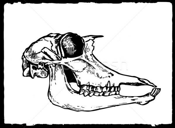 Vecteur dessin crâne blanche papier fond Photo stock © basel101658