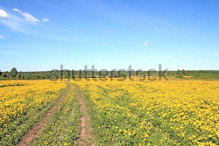 Landelijk weg hemel gras natuur landschap Stockfoto © basel101658