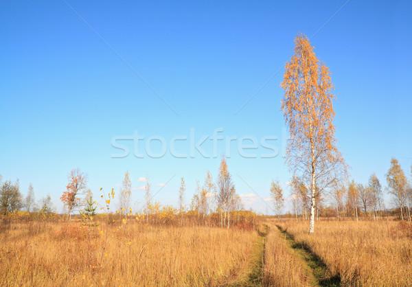 желтый береза сельский дороги трава древесины Сток-фото © basel101658