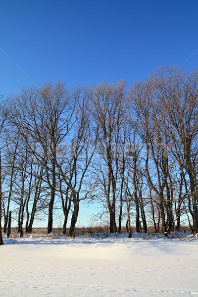 дуб древесины побережье зима реке небе Сток-фото © basel101658