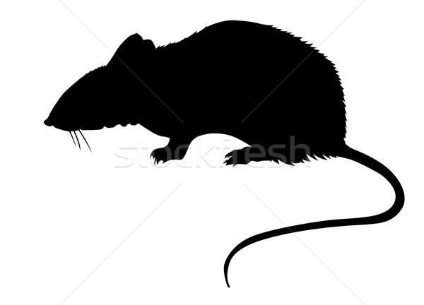 Vektör çizim siluet sıçan beyaz fare Stok fotoğraf © basel101658
