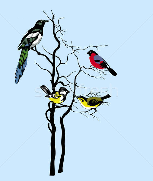 vector silhouette of the birds on tree Stock photo © basel101658