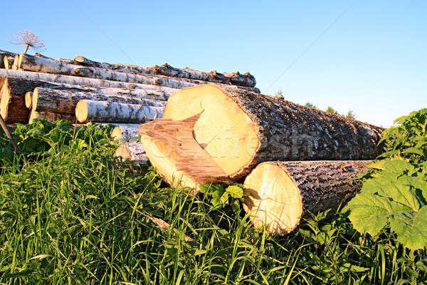 Vu arbre texture bois forêt industrie Photo stock © basel101658