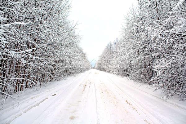 winter landscape Stock photo © basel101658