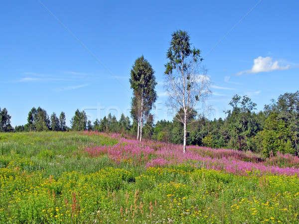 meadow near wood   Stock photo © basel101658