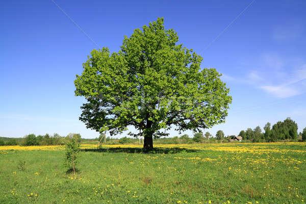 Eiken veld hemel voorjaar gras zomer Stockfoto © basel101658