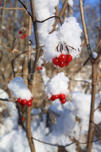 Neve fiore albero letto rosso impianto Foto d'archivio © basel101658