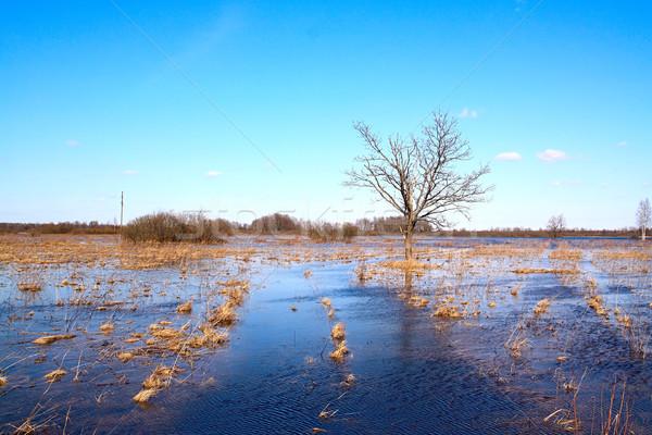 oak in water Stock photo © basel101658