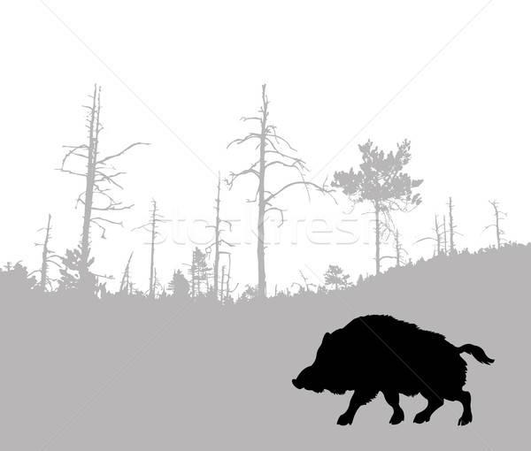 вектора рисунок силуэта кабан лес Сток-фото © basel101658