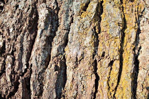 cortex tree Stock photo © basel101658