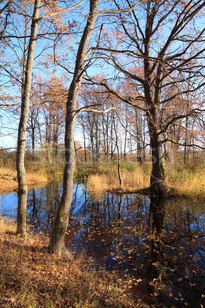 Kicsi tó ősz fa víz levél Stock fotó © basel101658