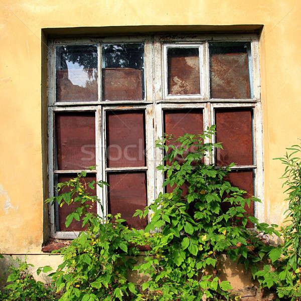 ウィンドウ 捨てられた 家 市 壁 自然 ストックフォト © basel101658