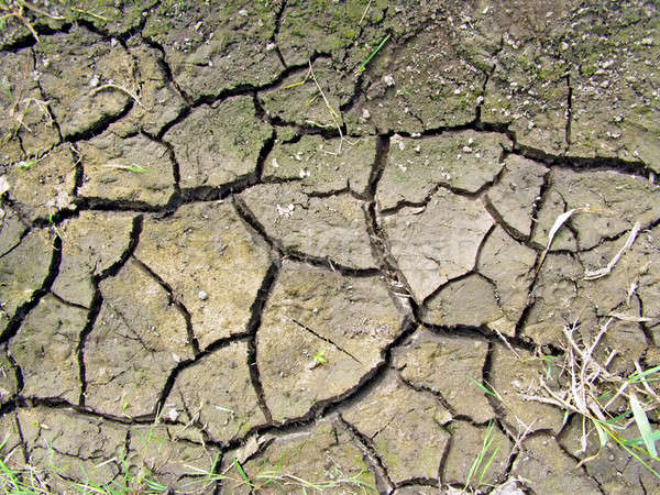 dry land Stock photo © basel101658