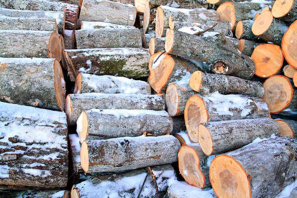 Yakacak odun ağaç doğa kar çerçeve kış Stok fotoğraf © basel101658